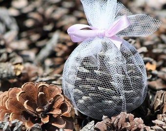 Scented East Coast Pine Cones (6)