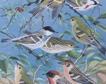 Wood Warblers,  1968 Vintage Book Plate, Book Page, Bird Print, North American Species