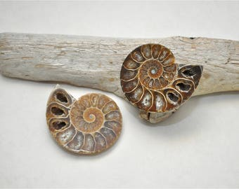 Ammonite Fossil Cabinet Knob Set - Choose Your Hardware