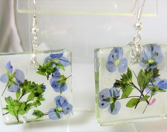 Blue Veronica,  Real Flower Earrings,   Pressed Flower Jewelry, Resin (2066)