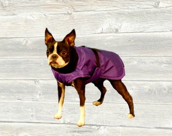 Boston Terrier Winter Coat, custom made with tummy panel