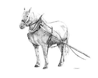Original Pencil Sketch of a Horse in Harness - 8 x 10 Art for Sale
