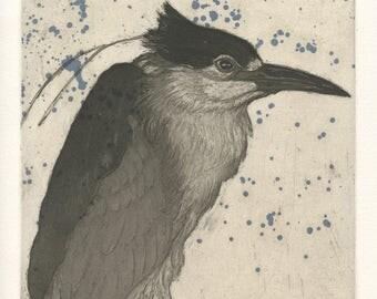 Black-crowned Night Heron, Original Fine Art Etching