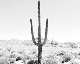Black and white wall art, Desert Art, Cactus Print, Desert Decor, Saguaro Cactus, Square Print, Square Wall Art, Black And White Photography