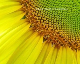Yellow Sunflower Nature Wall Art Home Decor Digital Download Fine Art Photography Linda Fischer of Fischerimages