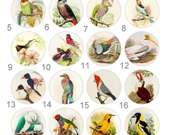 Birds Hummingbird Parrot Finch Pinback Button Flatback Badge or Magnet 1 inch set of 10