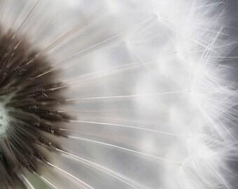 Dandelion photography print-Dandelion print-Nature Photography- flower Photography - Dandelion wall art- Dandelion Art- Home Décor