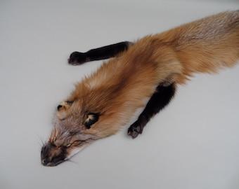 Gold Fox Pelt