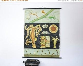 SALE Vintage School Chart Freshwater Polyp, Paper on linen, german school print