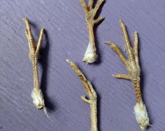Lot of 4 Real Chicken Feet animal taxidermy bird fowl game feather toe claw bone art craft part piece make made supply voodoo fetish magic