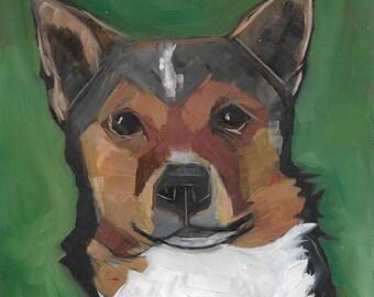 Shelter Dog 17
