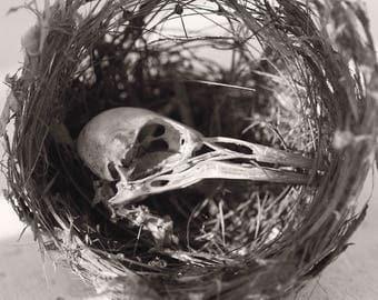Tiny Bird and Nest fine art photographic print