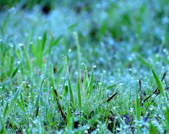 Morning Dew by Catherine Roché, Winter Morning Nature Photography, Raindrops Photography, Wet Grass Photography, After the Rain, Fine Art