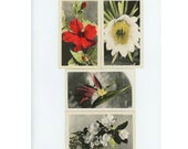 Set of 4 Hand Colored Vintage Snapshot Photos of Flowers, c1940s (611516)