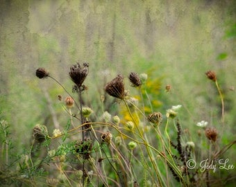 Wildflower Photography, Nature Photography, Landscape, Flowers, Field, Nature Lover, Wall Art, Home Decor, Queen Anne's Lace,Countryside