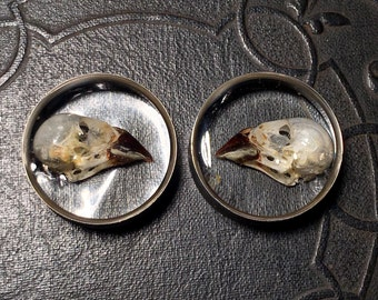 Side Bird Skulls REAL Beetle Cleaned Finch Skull Specimen PAIR Resin Taxidermy Double Flare Steel Tunnel Gauge Plugs 28mm Vulture Culture