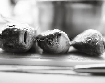 Trio Fish black and white photograph of fish print