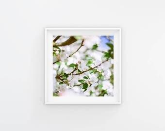 White Blossom fine art Square Print 6x6  spring summer vintage wall art