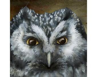 Boreal Owl 8x8 Signed fine art print Bird lover gift
