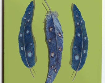 Pair of Feather Coasters  4.25x4.25