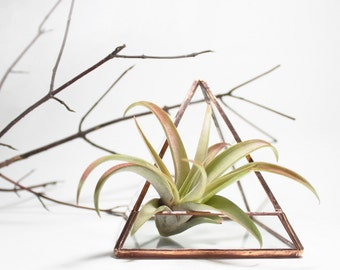 Pyramid Terrarium / Small Stained Glass Air Plant Terrarium