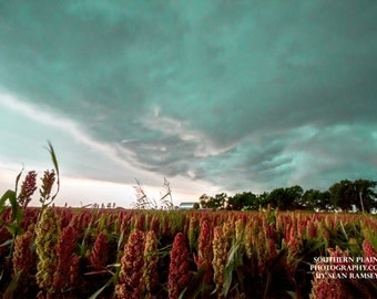 Storm Photography, Landscape Photography, Farm Print, Maize Fields, Farm Scenes, Oklahoma Photos, Rural Photography, Teal, Red, Green