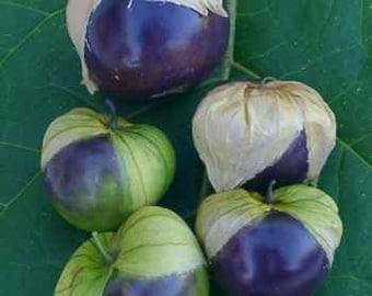 Organic Purple Tomatillo Seed, non-GMO, Grown in the USA, Heirloom