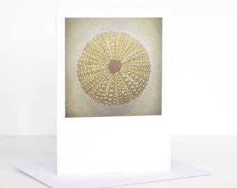 Photo greeting card, Photographic greeting card. Sea Urchin Photographic Greeting Card. Blank card. Coastal greeting card.