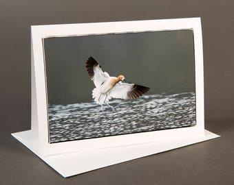Blank photo notecard, Avocet