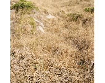 Beach Imprints (2)