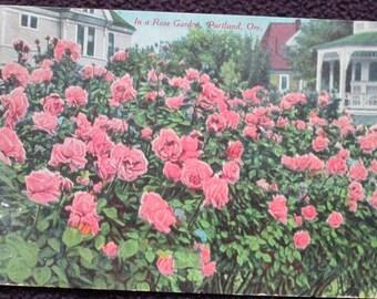 Vintage Portland OR Rose Garden Postcard