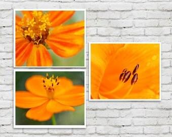 Orange wall art set, 3 floral art pictures flower macro photography, botanical print set, green orange gallery wall, living room decor