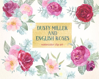 Dusty miller & english roses watercolor clip art,hand drawn. POSIES. Roses, peony, garden wedding,pink flowers invitations
