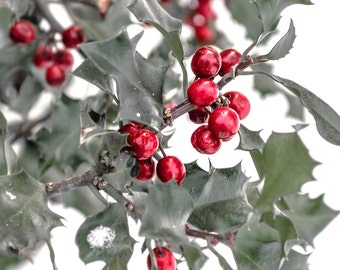 Holly Print, Christmas Print, Christmas Season, Christmas Art, Christmas Decor, Red Holly