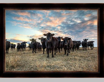 Cattle photo, Angus at Sunset, Western art, black Angus cattle, wall decor, ranch photography, western wall art, western decor Free Shipping