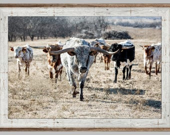 Texas Longhorn cattle photo print or canvas, barnwood frame, Ranch photography, wall art, wall decor, western art, print.  Free Shipping