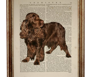 Field Spaniel Dog, beautiful Art Print on Upcycled Dictionary Book page 8'' x 10'' inches