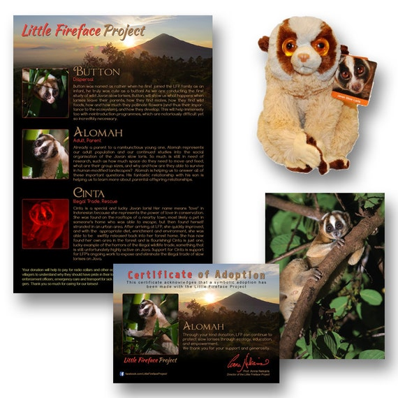 Slow Loris Adoption Pack Little Fireface Project