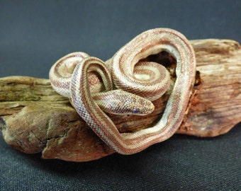 TAXIDERMY Small Snake (no: 48A) Wood Is 17cm Long. Reptile