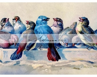 Instant Download Printable Art - Birds Blue Red Beautiful Art Print Antique Vintage Feeding Flock - Paper Crafts Altered Art Scrapbooking