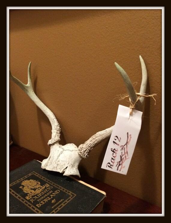 Deer antlers 12 decor deer antler wall hanging deer for Antler decorations for home