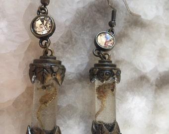 Seahorse Specimen Earrings