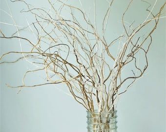 Curly Willow Twigs White Painted Birch Branches Mixed Bunch Twenty-Five (25) Count Bundle Decorative Branches Spring Planter Box Decor