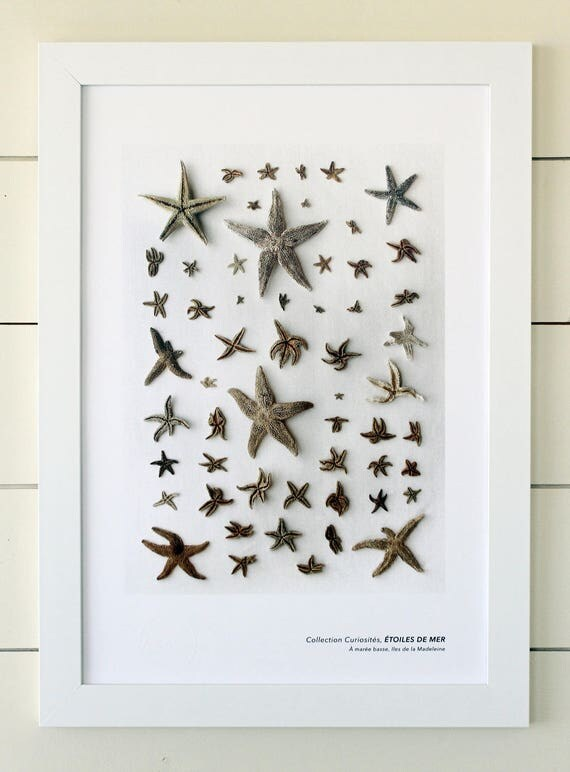 """Naturalist poster  STARFISH - 13"""" x 19"""""""