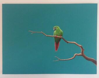 Original Bird Painting, Parrot (2015)