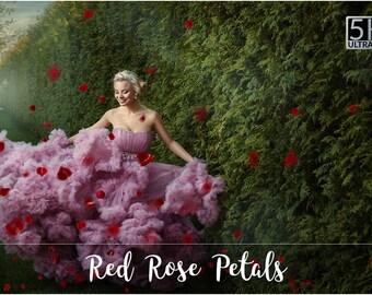 5K Red Rose Petals