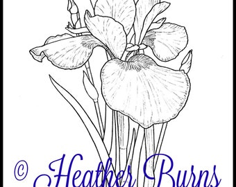 Coloring Page Iris Tennessee State Flower Adult