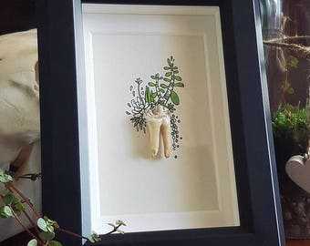 boar tooth shadow box | glass frame | green succulents