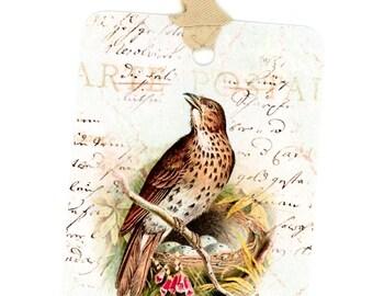 Bird and Nest Gift Tags , Vintage Bird Tags , Speckled Eggs , Brown Bird , Light Aqua , Bluebird Lane Tags