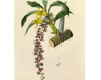 Orchid Print Book Plate SALE Buy 3, get 1 Free